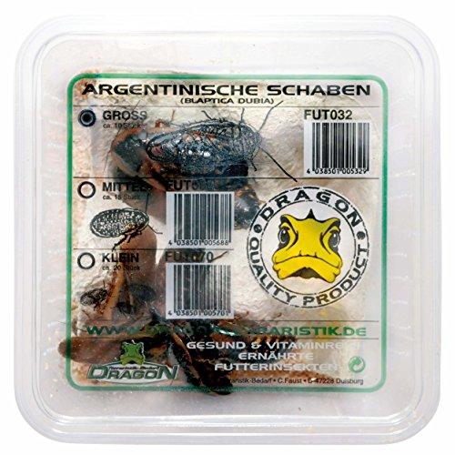 Argentinische Schaben klein ca. 20Stk in Dose - Futtertiere - Reptilienfutter - Futterinsekt