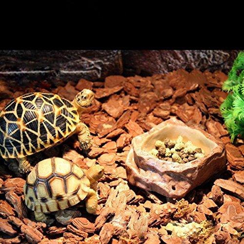 Bargain World Reptilienfutter Wasserschale Bowl Feeder Zubehör Crocks Pet Reptile Produkt Dekor für Terrarien