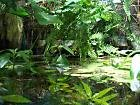 Pflanzenset f�r Regenwald Paludarium Terrarium